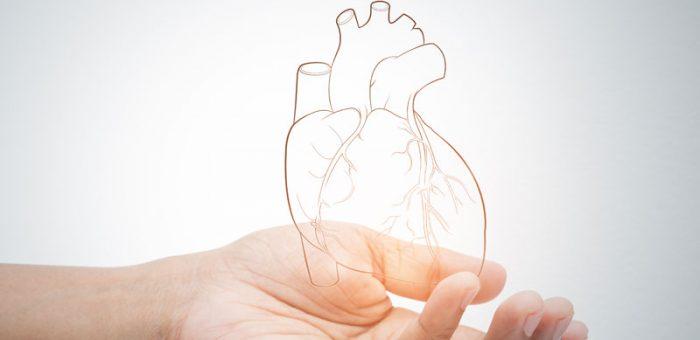 Сириус-Д за сърце и кръвоносна система – положително влияние